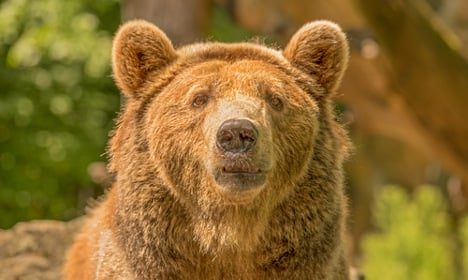 Gothenburg police called after bear sighting