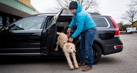 Stray dog Arthur moves in with Swedish owners