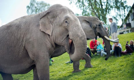 Swedish council outlaws elephants in town centre
