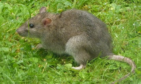 Rat attack fears after care home face bite scandal