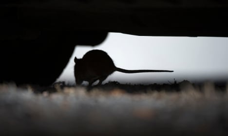 Rat attack fears at Stockholm care home