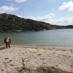 The Local's Editor spotted this cute cow on Klåverön island off Sweden's west coast on July 19th.Photo: Maddy Savage/The Local