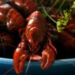Swedish crayfish thieves pinched by officers