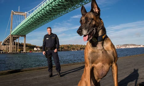 Three barks for Swedish canine cop of the year