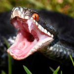 Teen 'killed gay man and put snake on body'