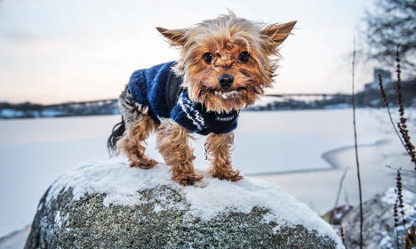 Swedes brace for high winds battering country