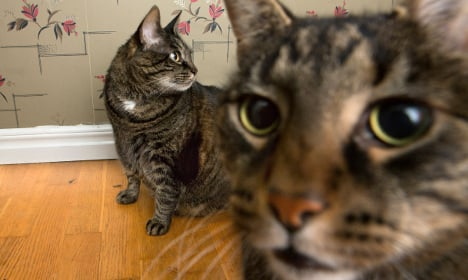 Swedish couple banned from owning animals kept 100 cats