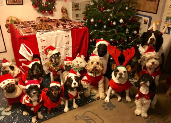 These dogs had a Christmas julbord and it was the cutest thing ever