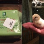 Swede buys eggs from supermarket, hatches chick