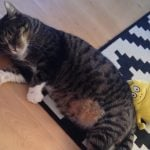 Missing cat returns home after NINE years