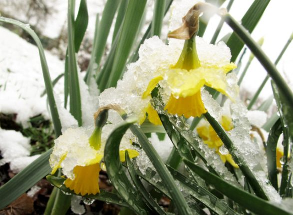 Easter weekend: Get ready for snow, Sweden