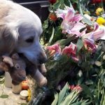 Touching tributes to dog who was fifth victim of Stockholm attack