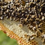 Can a 'bee friendly zone' help save Stockholm's pollinators?