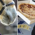 Tourists fed 'pizza, ice cream and sausages' to horses at Swedish farm