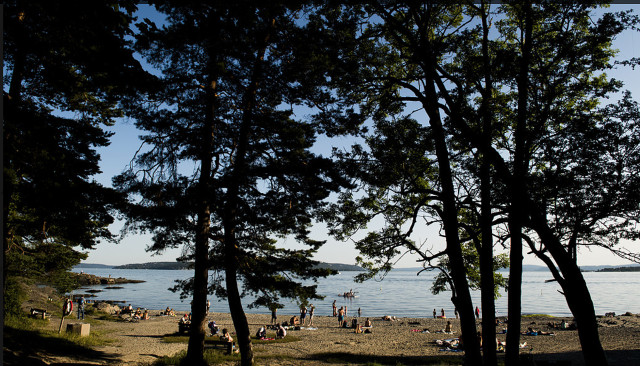 Dry Swedish summer creates forest fire risk and low water levels