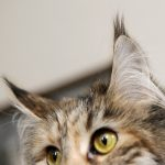 Swedish animal lover offers 10,000 reward for info on cat hit and run