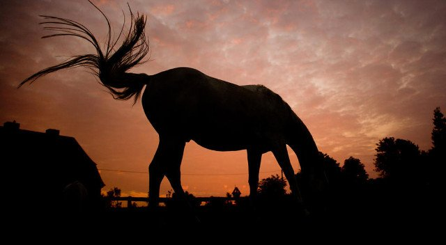 Wanted in Sweden: Manure from hundreds of horses to heat homes