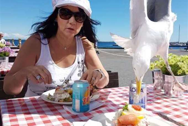 Cheeky seagull photobombs Swede's seaside lunch… and steals his food