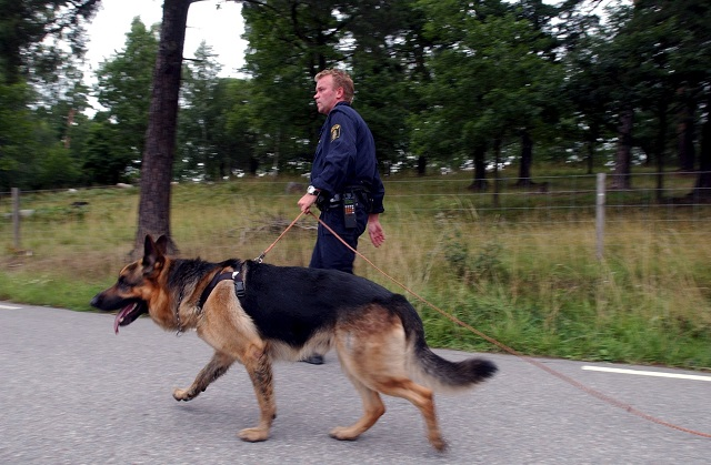 The Swedish army spent more than 12 million kronor on dogs
