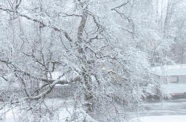 Winter is coming: cold snap headed for Sweden