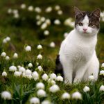 Russian man banned from Sweden attempts return in search of cat