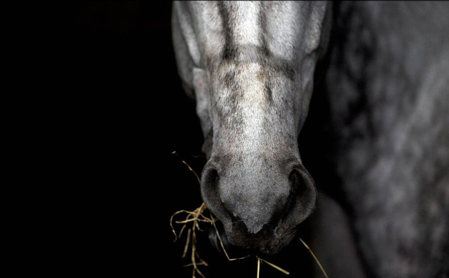 Man in Sweden fined for sexually assaulting a horse