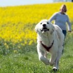 Dog-owners live longer, say Swedish scientists