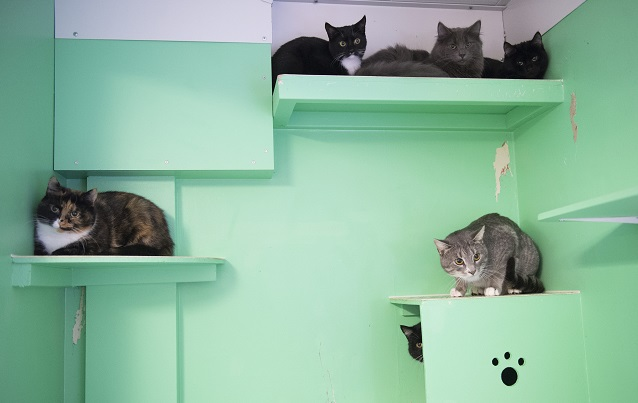 Swedish government proposes ban on pet abandonment