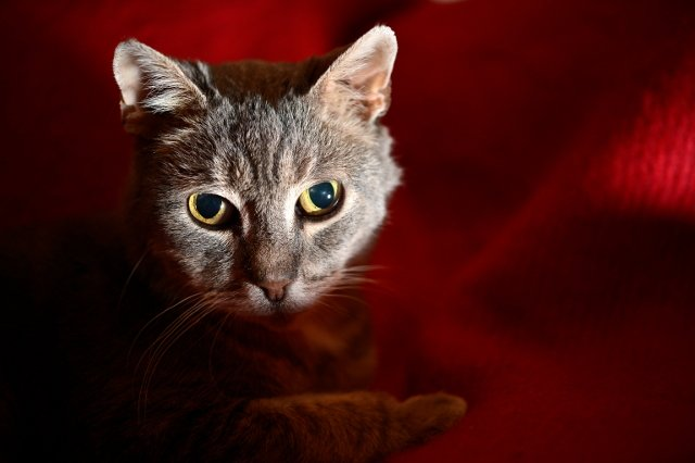 Umeå cat returns home after years on the run
