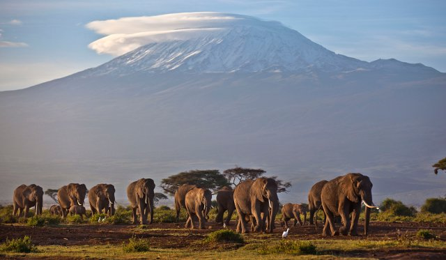 Why do today's elephants not interbreed like ancient species?