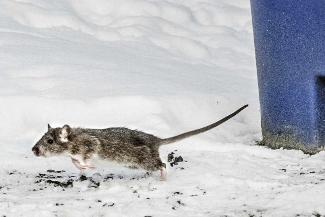 Pest control brought in to keep rats away from Swedish hospital entrance