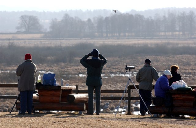 Birdwatchers rejoice as first sign of spring spotted in Sweden