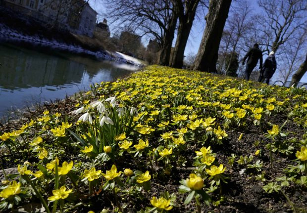 First sign of spring in Sweden? 'Double-digit' temperatures forecast as April begins