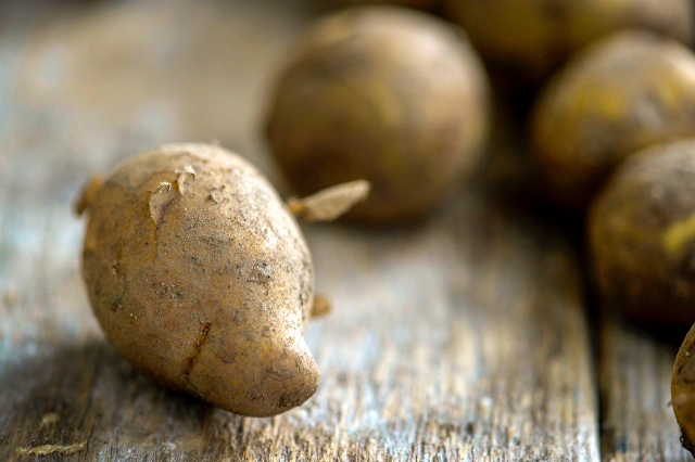 Swede sells first potatoes of the season for 80,000 kronor