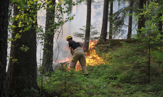 Swedish train causes forest fire with broken brakes