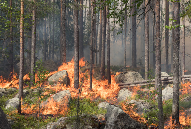 Sweden lights forest fire the size of 520 football pitches