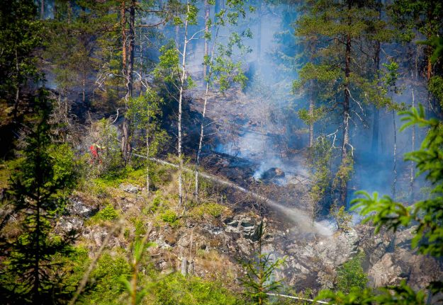 Dry weather means 'extreme risk' of forest fire in Sweden: agency