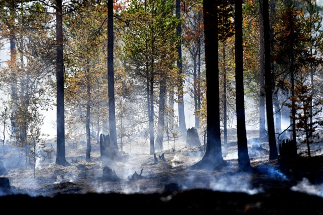 Sweden wildfires spark criticism of forest industry