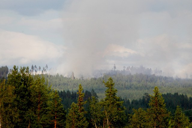 Sweden's Sami reindeer herders hit by wildfires and drought