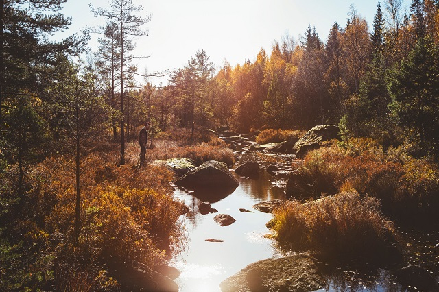 Sweden's green soul: why forests are vital to the Swedish culture and economy
