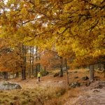 Members' quiz: Do you know these Swedish autumn words?