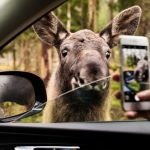 #MySweden: How to take over The Local's Instagram for a week