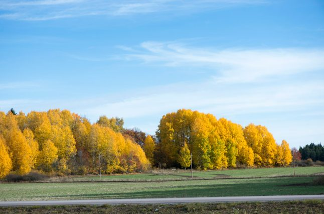 Swedes to bask in unusual October warmth