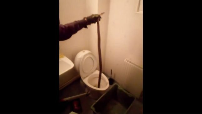 Swede's lost tropical snake shows up in neighbour's toilet in frigid Lapland