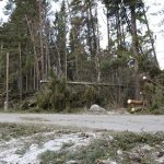 Storm Alfrida: It may be a week before power is fully restored