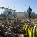 Malmö might not have a winter this year