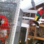 Pippi Longstocking parrot dies after reaching 'biblical age'