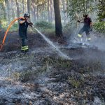 Sweden's 'chaotic' response to historic wildfires criticized