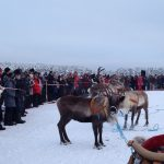 The reindeer race, one of the most popular events at the Jokkmokk Winter Market.Photo: Florence C-Koch