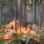 Why has the number of climate articles in Swedish media doubled in four years?
